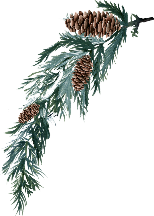 Pinecone%20stem%202_edited.png