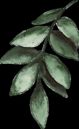 Leaf%2520stem%25207_edited_edited.png