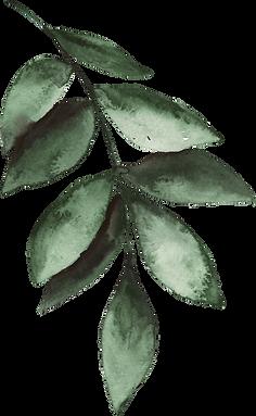 Leaf%20stem%207_edited.png