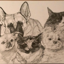 Two cats Three Dogs