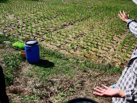 Farmstay: A Kelantanese Experience I