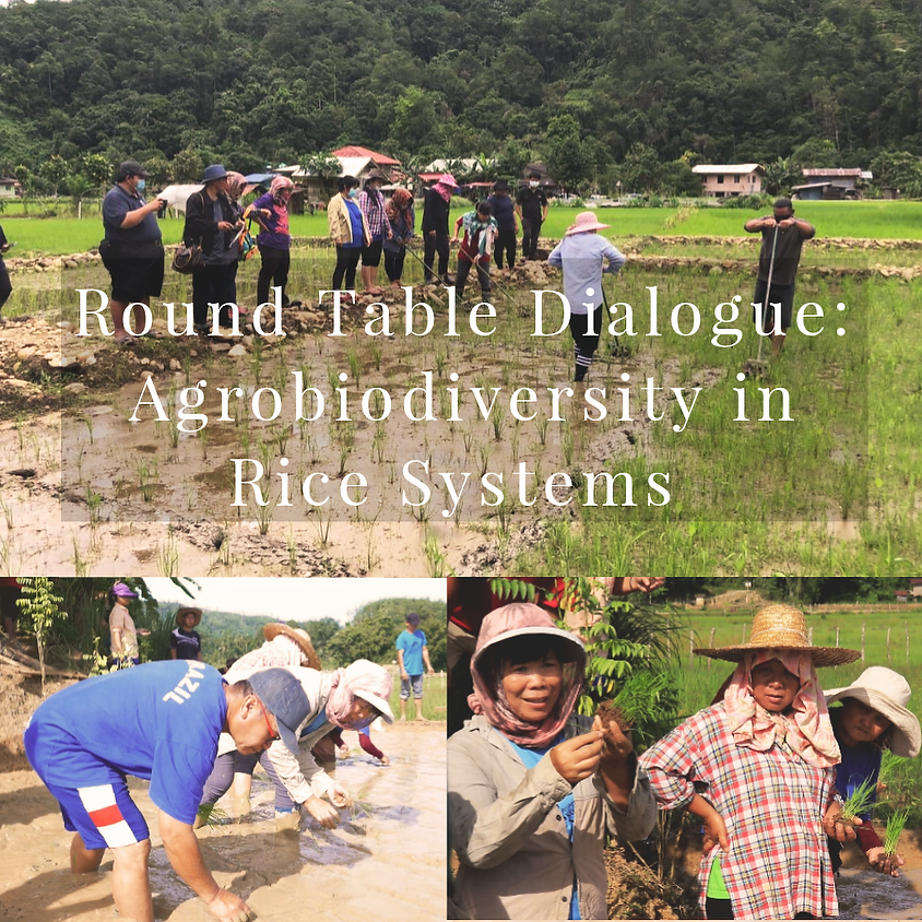 Round Table Dialogue: Agrobiodiversity in Rice Systems