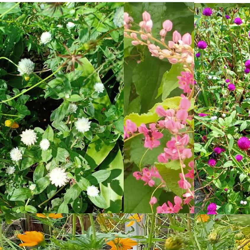 Farmer Field School SRI Seligi: Planting Flowers, 18 July 2020