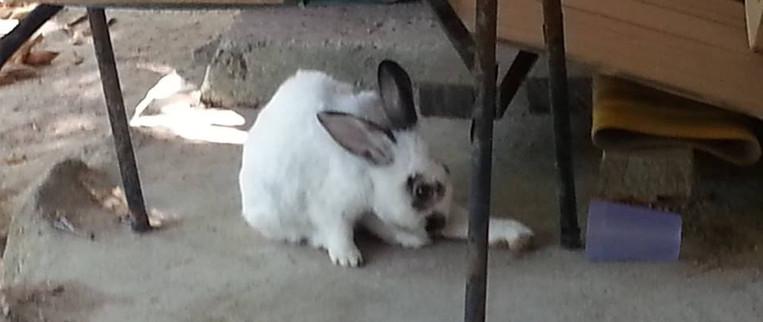 15 Mac 15 rabbit.jpg