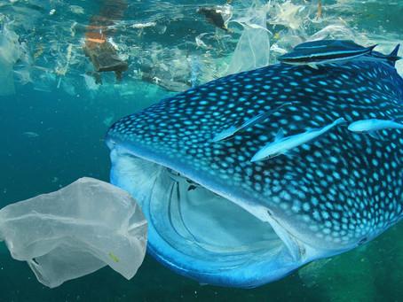 Was servieren wir denn da? Fisch mit Plastik!