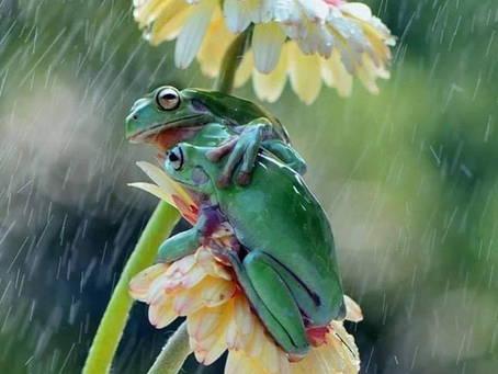 2020 is just a rainy year! We stick together - we will be fine!