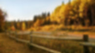 road-fence-autumn-fall-tree.jpg