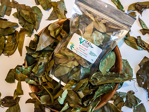 Wild Crafted Sour Sop Leaves