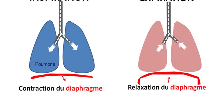 Astuce bien-être: pratiquez la respiration abdominale pour réduire votre stress