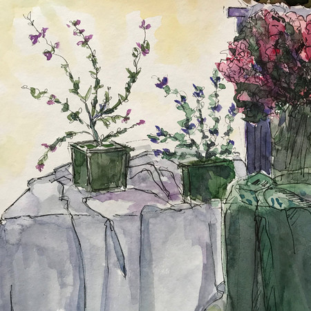 Small Plants on Table