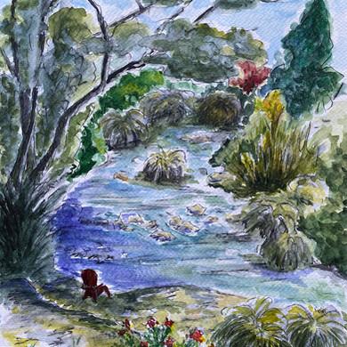 Creek in Ben Lomond