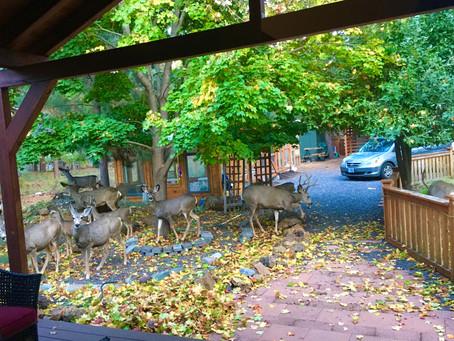 October is for reading (tea) leaves and raking (ten) books