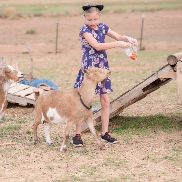 Our goats are fun for the whole family!