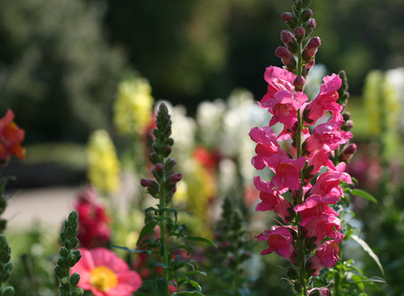What will be Blooming this Summer?
