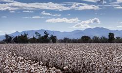 RohanBoehm1460-cottonfield2012_edited.jp