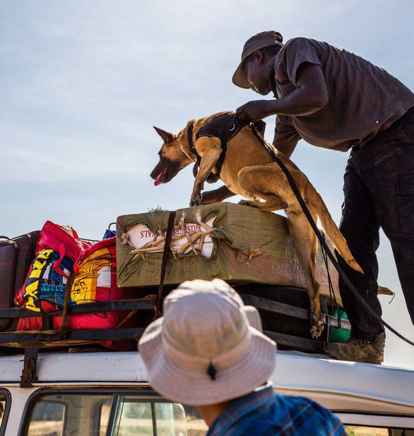 Deploying K9 Wildlife Contraband Unit in Southern Africa