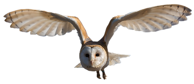 owl_PNG30.png