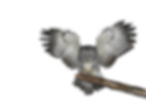png_owl_by_moonglowlilly-d5n4q3l.png