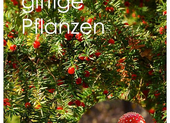 P05 - Giftige Pflanzen