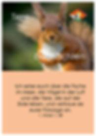P04 Vorderseite Tiere.jpg