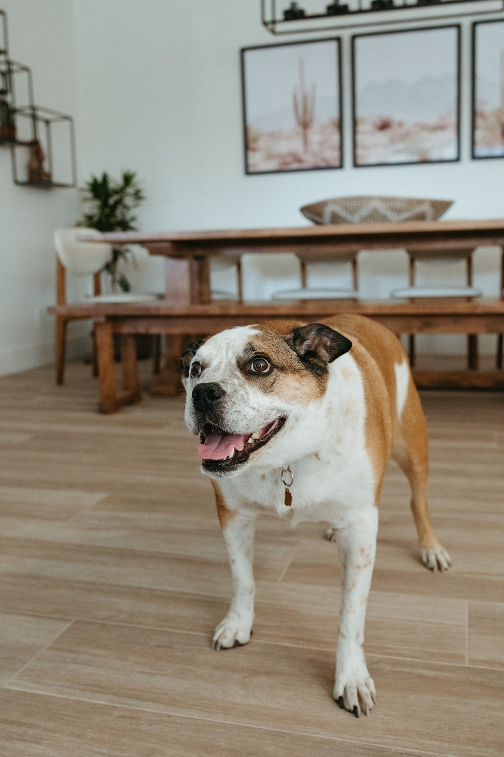 dog poses in Arcadia home for family portrait