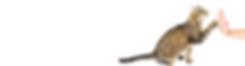 Alternatief mmnl homepage-2.png