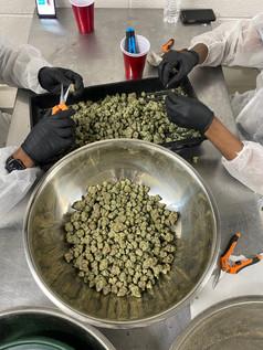 #trimmingweed #michigantrimcrew #detroittrimteam #Cannabistrimteam #Affordabletrimteam #detroitcannabis