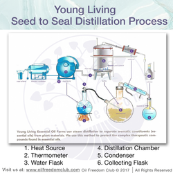 Seed to Seal Distillation-01
