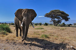 Amboseli-Kenya.jpg