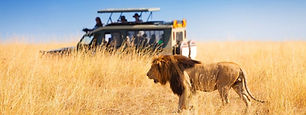 Safari_Kenya_Travel.jpg