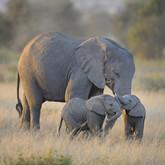 twin-baby-elephants-wallpaper.jpg