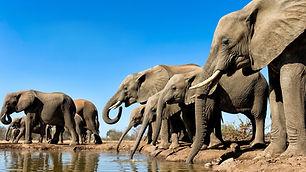waterhole_elephant.jpg