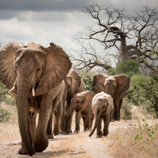 Elephants_Kenya.jpg