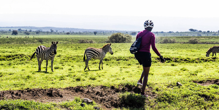 SansaTravel_zebra_encounter.jpg
