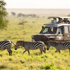 Safari_Zebra.jpg