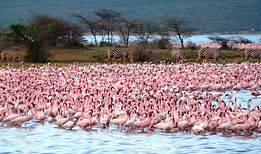 lake_bogoria_flamingo_and_zebras.jpg