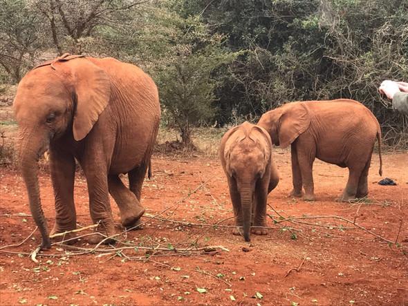 SansaTravel_Elephants.jpg