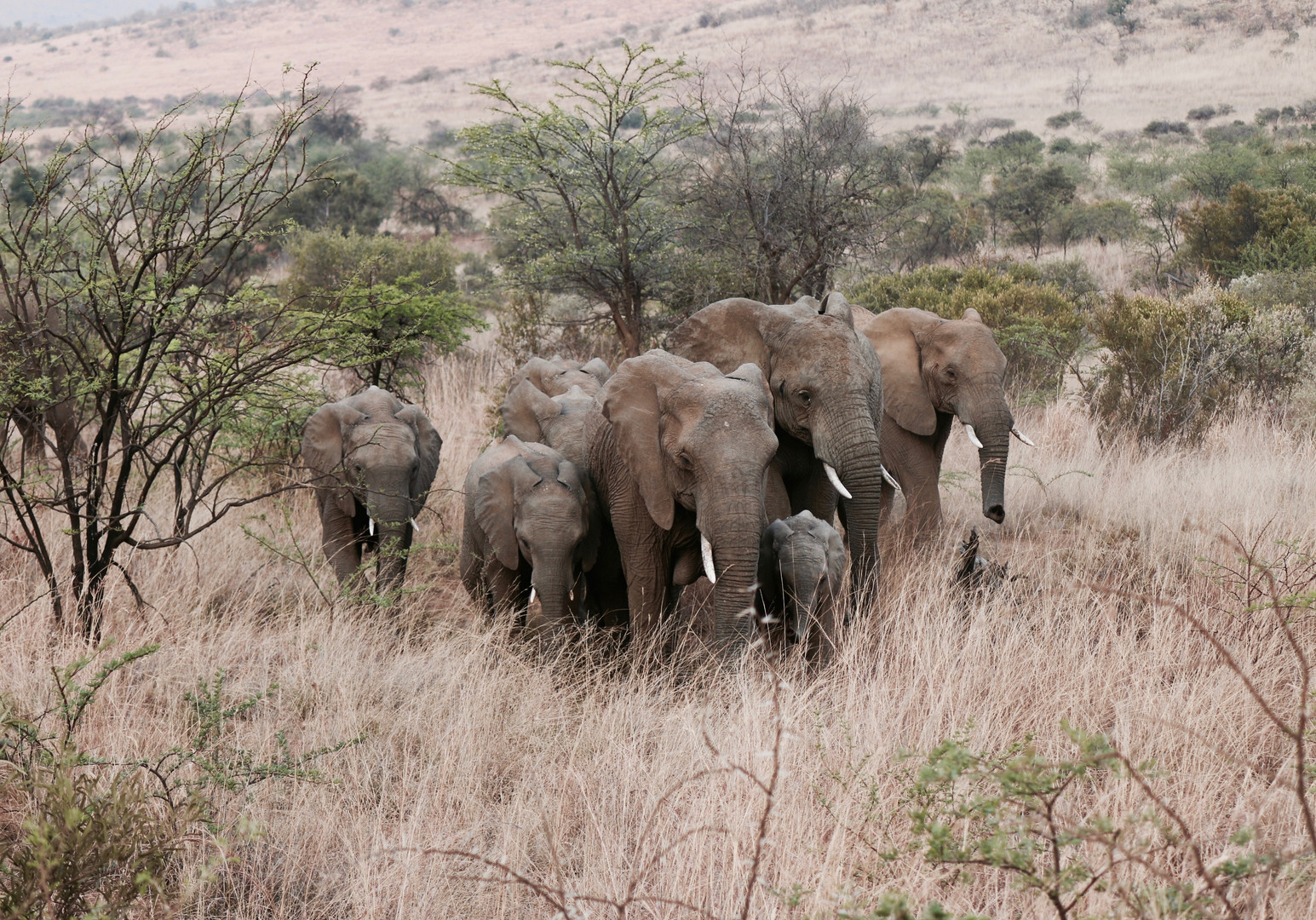 Kenya_Safari_Elephants-1.jpg