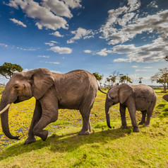 elephants-in-masai-mara.jpg