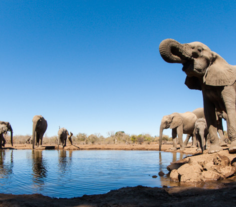 Elelphants_waterhole.jpg