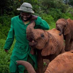 David_Sheldrick's_elephant orphanage_Nai