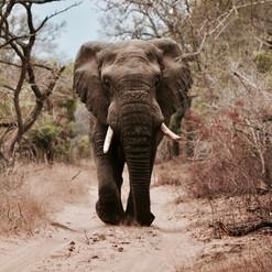 Kenya_Safari_Elephants-2.jpg