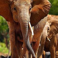 Tsavo East National Park_Kenya_SansaTrav