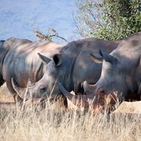 Rhino_Safari_Kenya.jpg