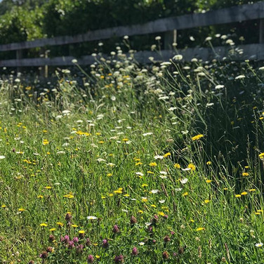Hard to beat...wild flowers