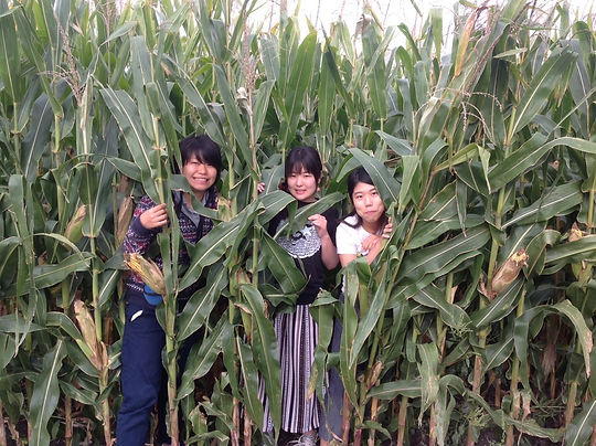 in corn.jpeg