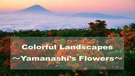 Yamanashi_Guidebooks.jpg