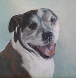 Baxter - commission