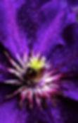 Mindfullness Meditation, Chakra Balancing & Violet Fire Healing