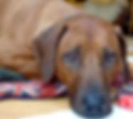 Jasper - Animal Assisted Psychoherapy